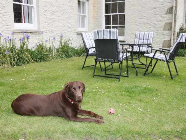 Bella on holiday at Cotna Cottage