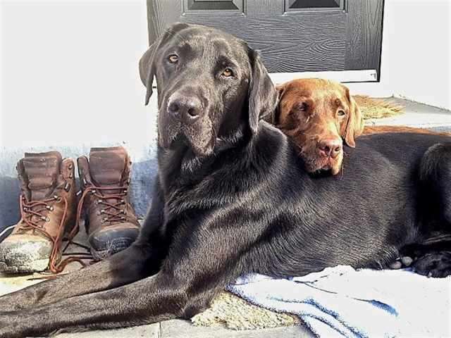 Can we go for a walk please!