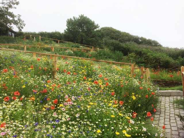 Terraced garden with wildflowers
