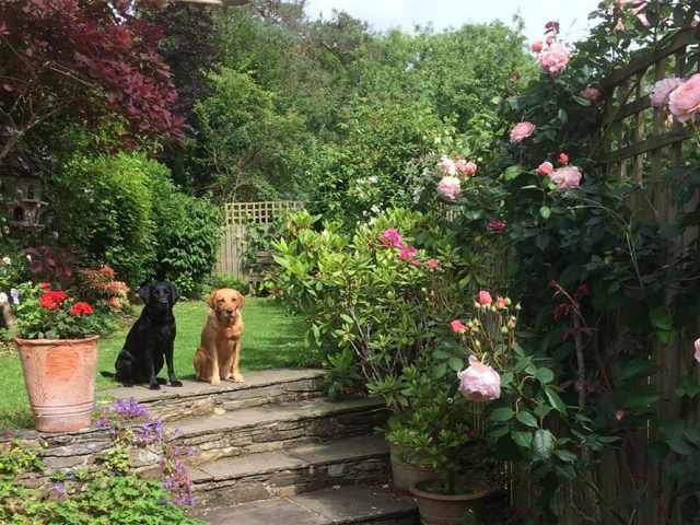 Lola and Inca enjoying the garden