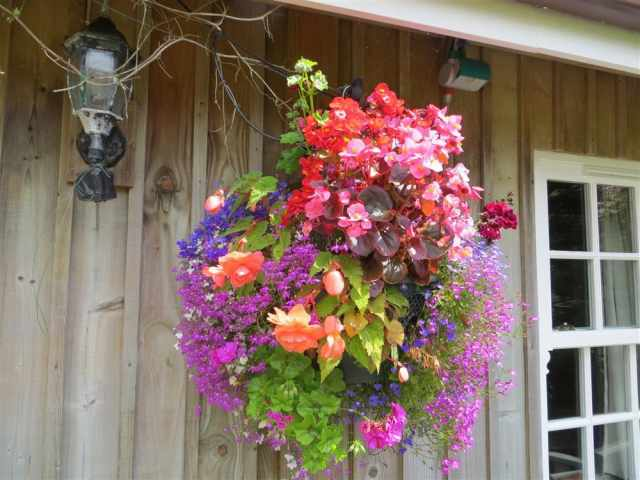 Flower basket in bloom
