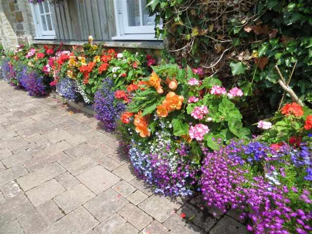 Flower troughs in bloom