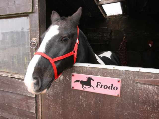 Frodo at London Wells Farm
