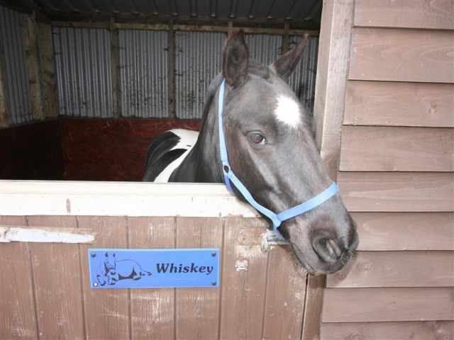 Whiskey at London Wells Farm